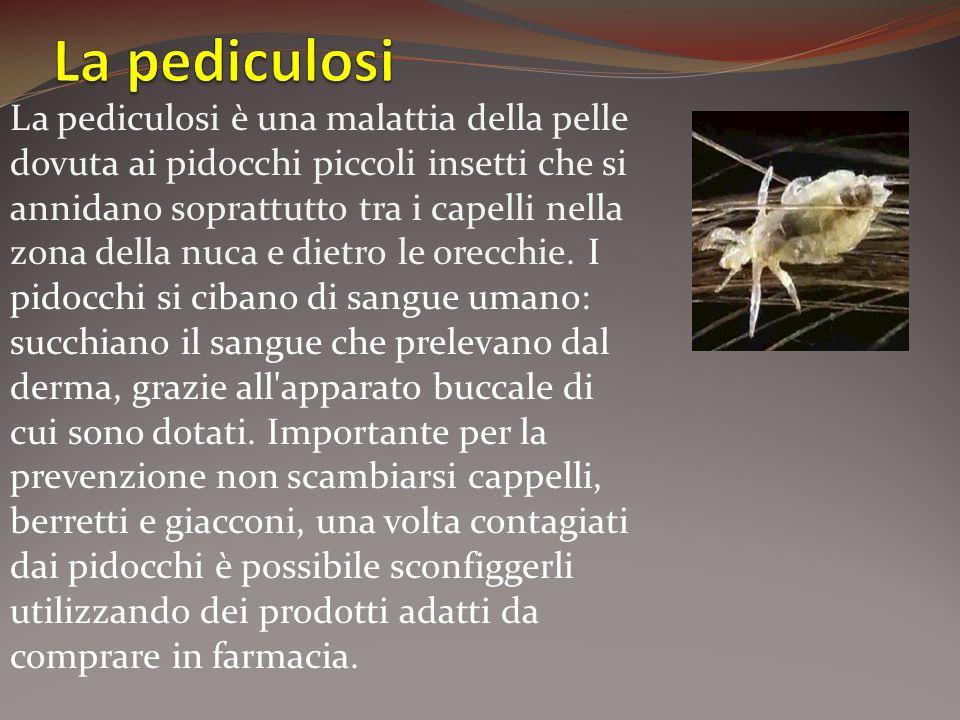 La pediculosi è una malattia della pelle dovuta ai pidocchi piccoli insetti che si annidano soprattutto tra i capelli nella zona della nuca e dietro l