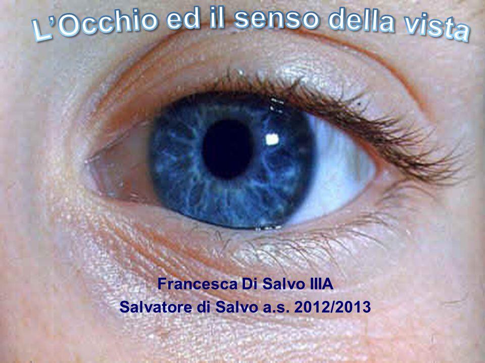 Il senso della vista è affidato ai fotocettori situati in una delle membrane poste allinterno degli occhi.