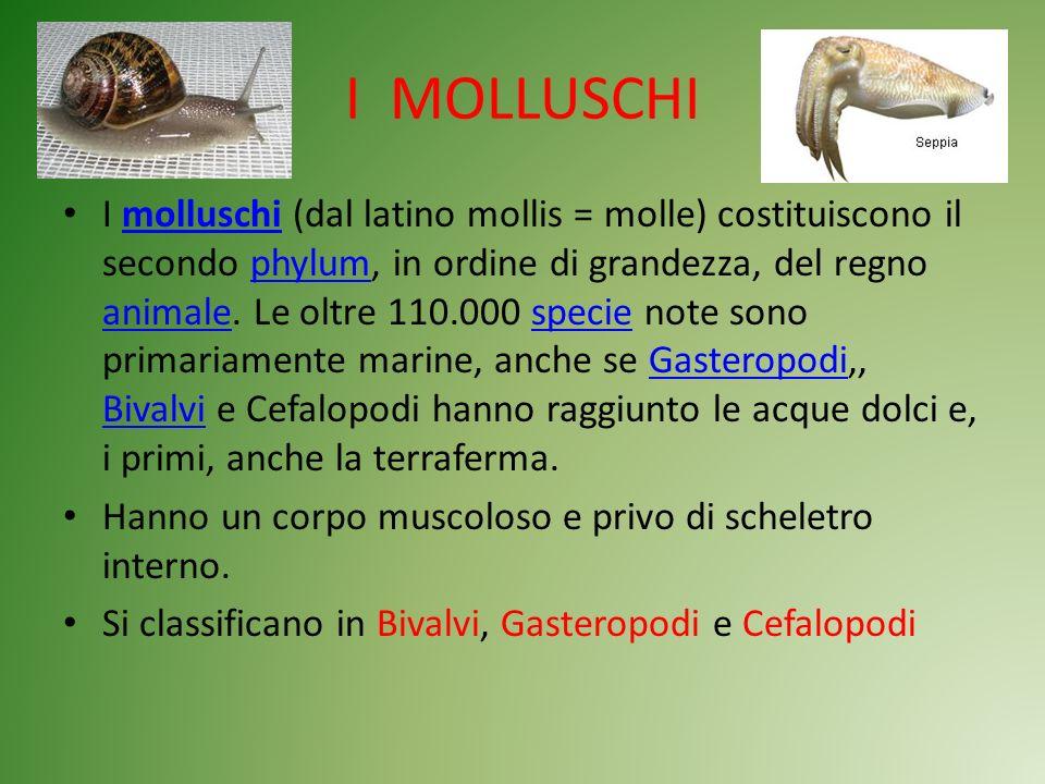 I MOLLUSCHI I molluschi (dal latino mollis = molle) costituiscono il secondo phylum, in ordine di grandezza, del regno animale. Le oltre 110.000 speci