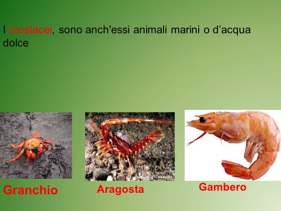 I crostacei, sono anch'essi animali marini o dacqua dolce Granchio Aragosta Gambero