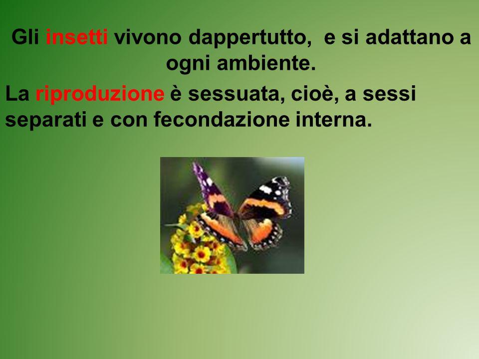 Gli insetti vivono dappertutto, e si adattano a ogni ambiente. La riproduzione è sessuata, cioè, a sessi separati e con fecondazione interna.