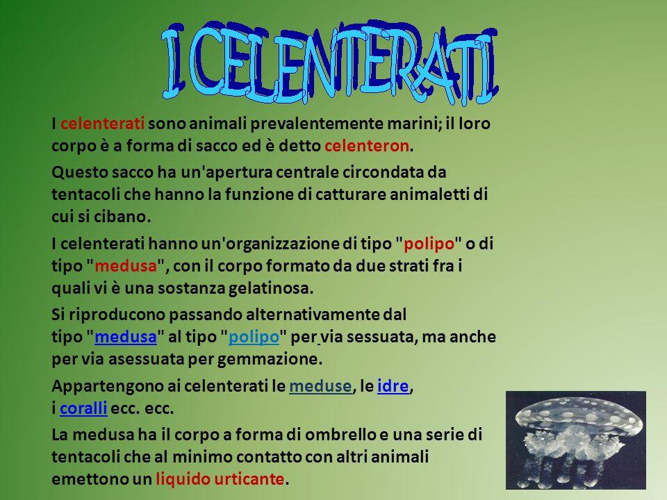 I celenterati sono animali prevalentemente marini; il loro corpo è a forma di sacco ed è detto celenteron. Questo sacco ha un'apertura centrale circon