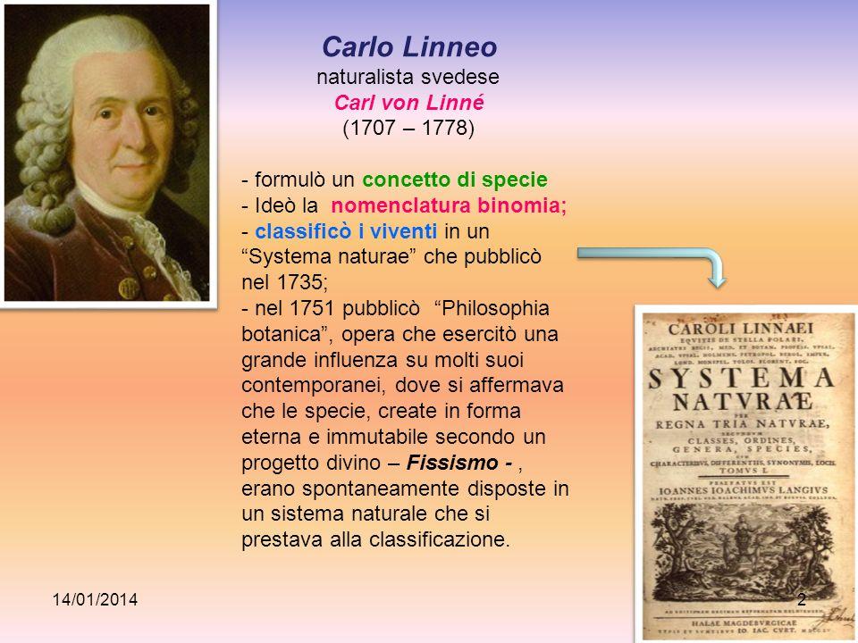 Carlo Linneo naturalista svedese Carl von Linné (1707 – 1778) - formulò un concetto di specie - Ideò la nomenclatura binomia; - classificò i viventi i