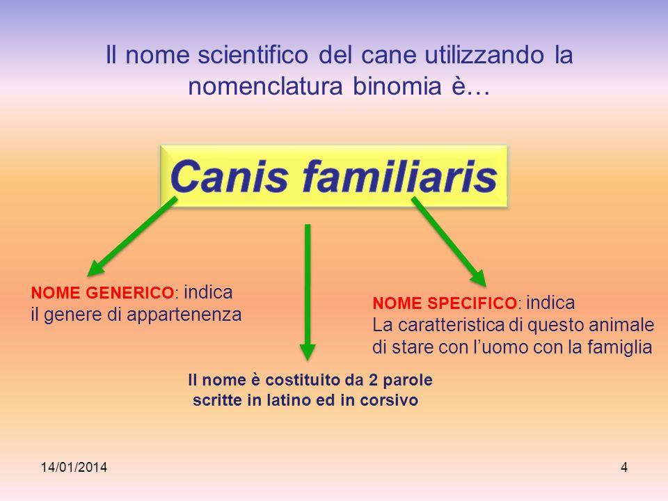 Il nome scientifico del cane utilizzando la nomenclatura binomia è… 14/01/20144 NOME GENERICO: indica il genere di appartenenza NOME SPECIFICO: indica