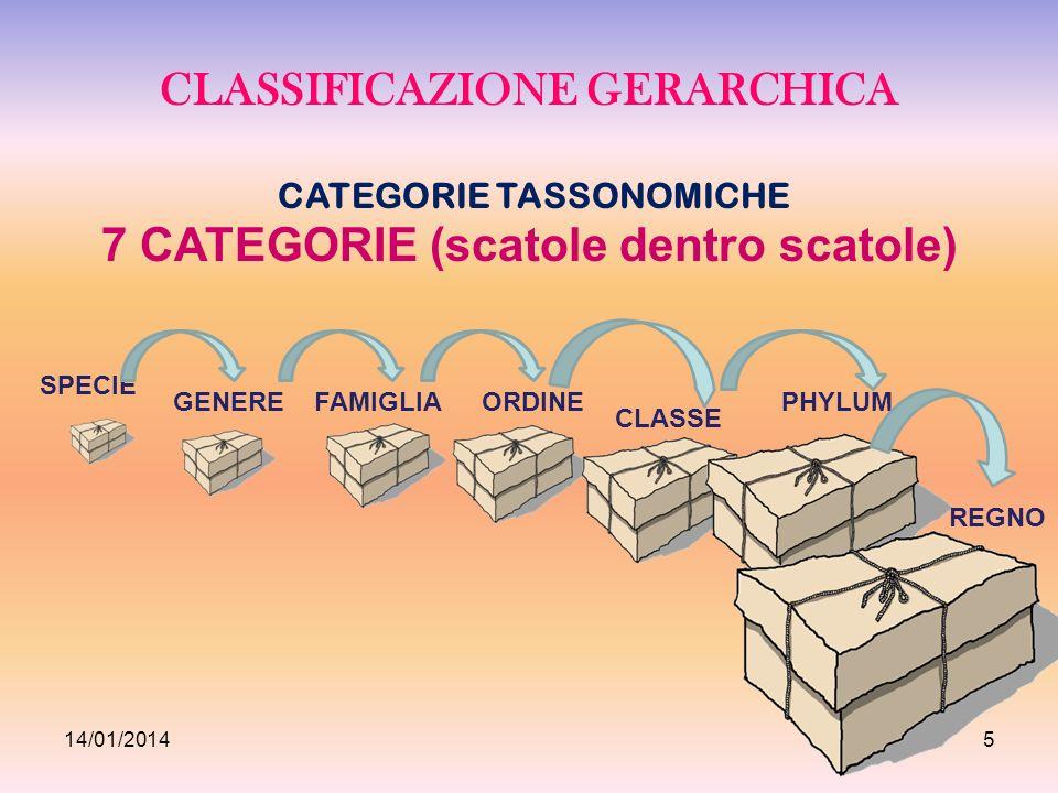 CLASSIFICAZIONE GERARCHICA CATEGORIE TASSONOMICHE 7 CATEGORIE (scatole dentro scatole) SPECIE GENEREFAMIGLIAORDINE CLASSE PHYLUM REGNO 14/01/20145