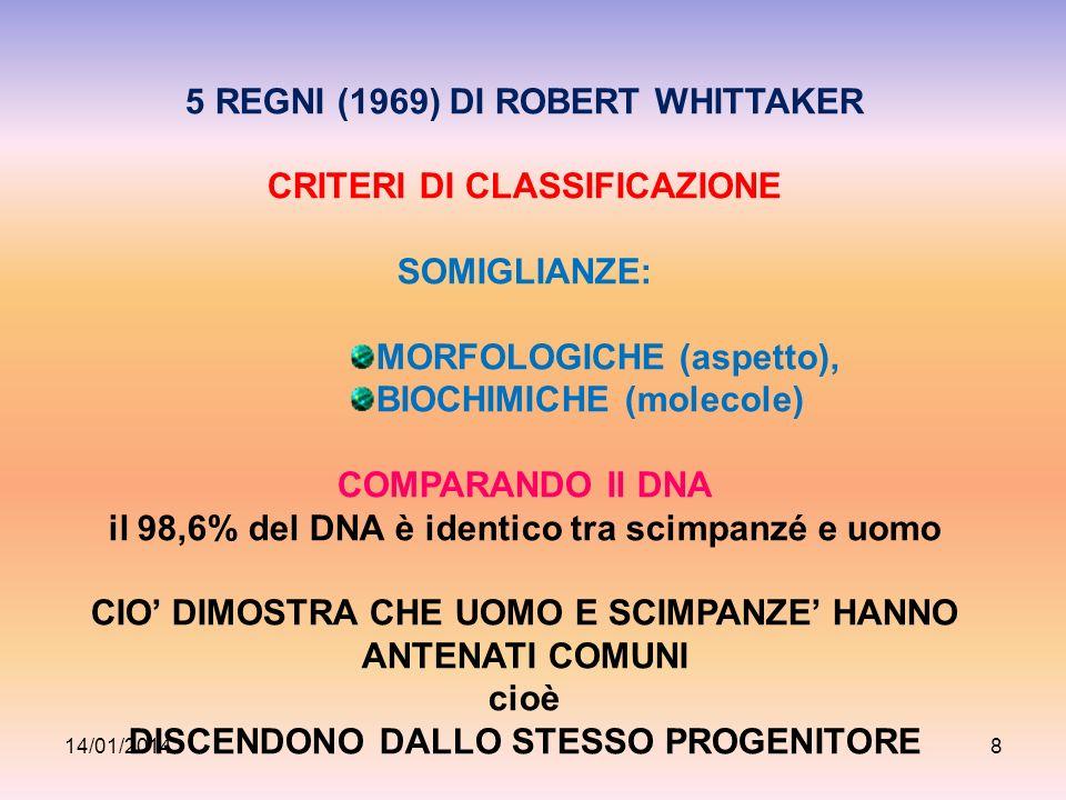 5 REGNI (1969) DI ROBERT WHITTAKER CRITERI DI CLASSIFICAZIONE SOMIGLIANZE: MORFOLOGICHE (aspetto), BIOCHIMICHE (molecole) COMPARANDO Il DNA il 98,6% d