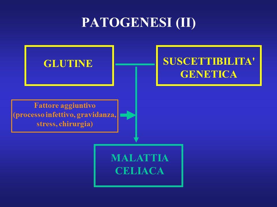 PATOGENESI (II) GLUTINE SUSCETTIBILITA' GENETICA MALATTIA CELIACA Fattore aggiuntivo (processo infettivo, gravidanza, stress, chirurgia)