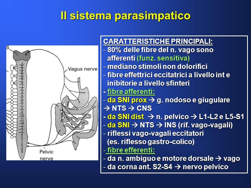 Il sistema parasimpatico CARATTERISTICHE PRINCIPALI: - 80% delle fibre del n. vago sono afferenti (funz. sensitiva) afferenti (funz. sensitiva) - medi