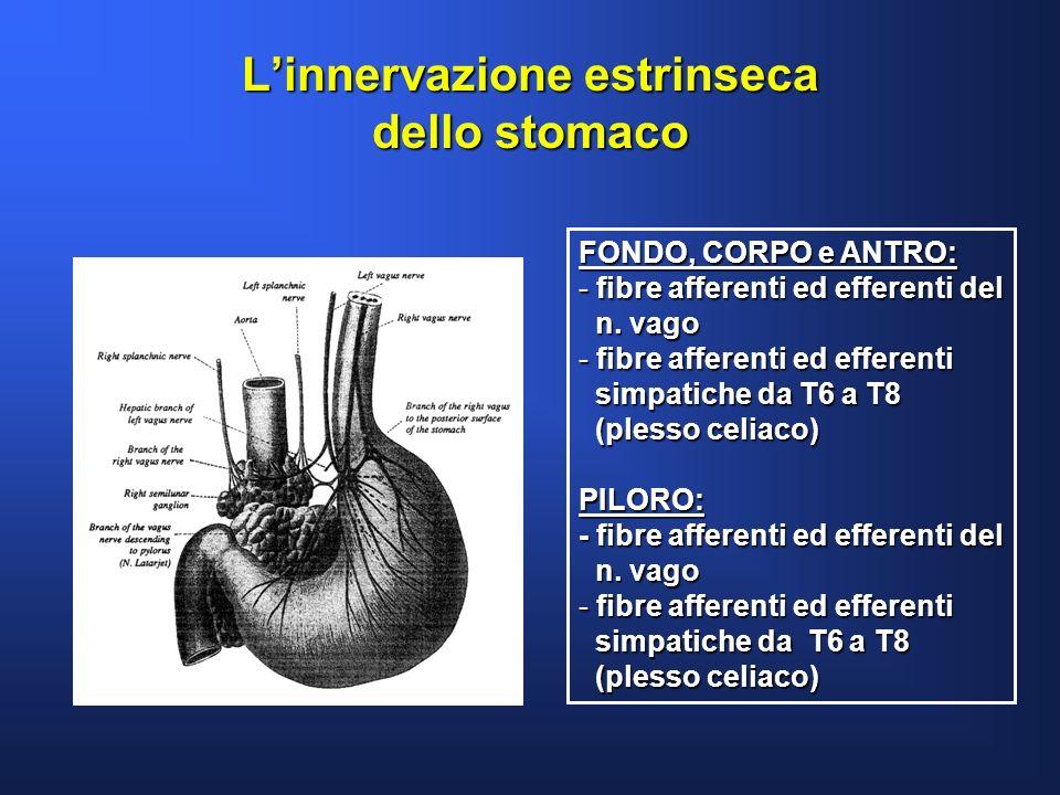 Linnervazione estrinseca dello stomaco FONDO, CORPO e ANTRO: - fibre afferenti ed efferenti del n. vago n. vago - fibre afferenti ed efferenti simpati