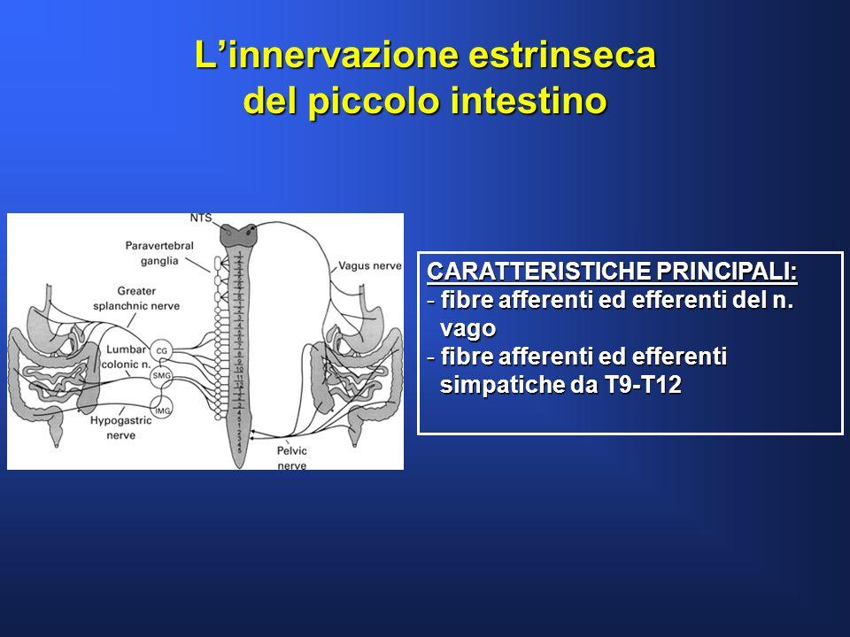 Linnervazione estrinseca del piccolo intestino CARATTERISTICHE PRINCIPALI: - fibre afferenti ed efferenti del n. vago vago - fibre afferenti ed effere