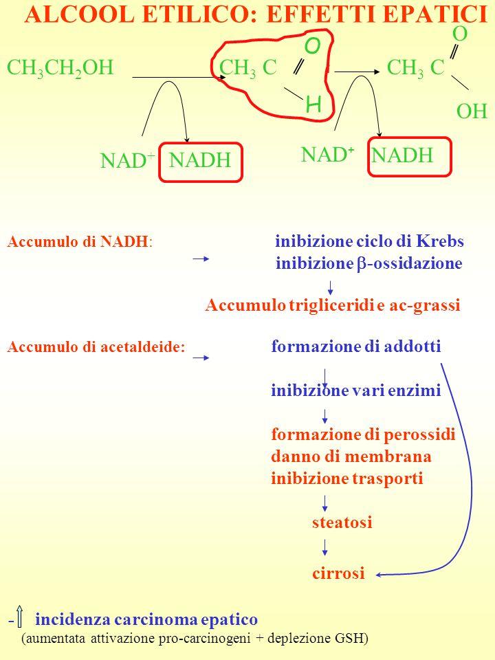 ALCOOL ETILICO: EFFETTI EPATICI CH 3 CH 2 OH CH 3 C CH 3 C NAD + NADH O H O OH Accumulo di NADH: inibizione ciclo di Krebs inibizione -ossidazione Acc