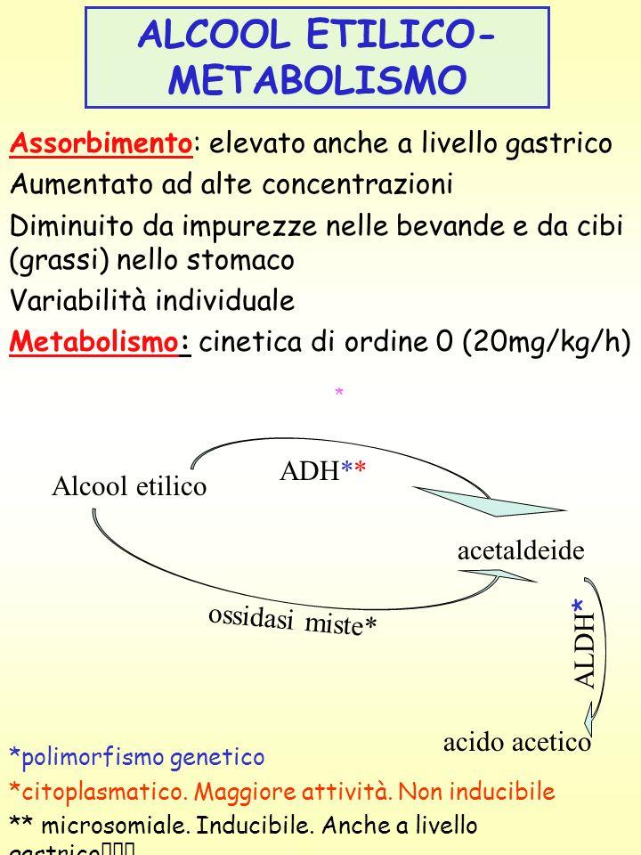 ALCOOL ETILICO- METABOLISMO Assorbimento: elevato anche a livello gastrico Aumentato ad alte concentrazioni Diminuito da impurezze nelle bevande e da