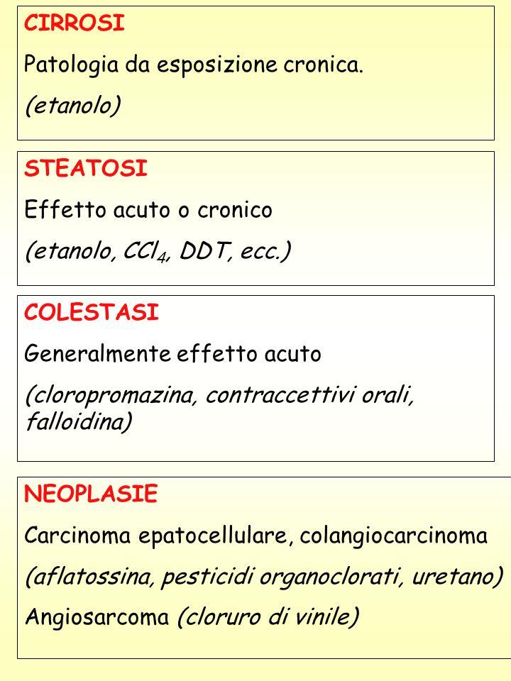 STEATOSI Effetto acuto o cronico (etanolo, CCl 4, DDT, ecc.) CIRROSI Patologia da esposizione cronica. (etanolo) COLESTASI Generalmente effetto acuto