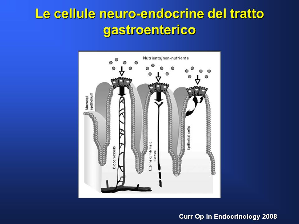 Le cellule neuro-endocrine del tratto gastroenterico Curr Op in Endocrinology 2008