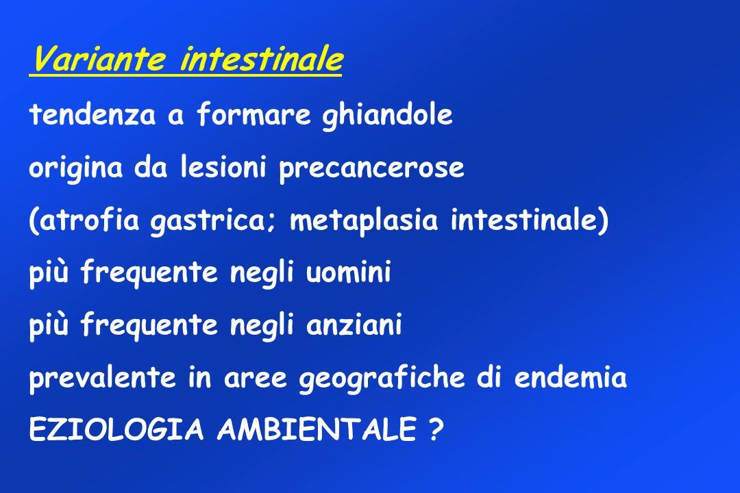 Variante intestinale tendenza a formare ghiandole origina da lesioni precancerose (atrofia gastrica; metaplasia intestinale) più frequente negli uomin