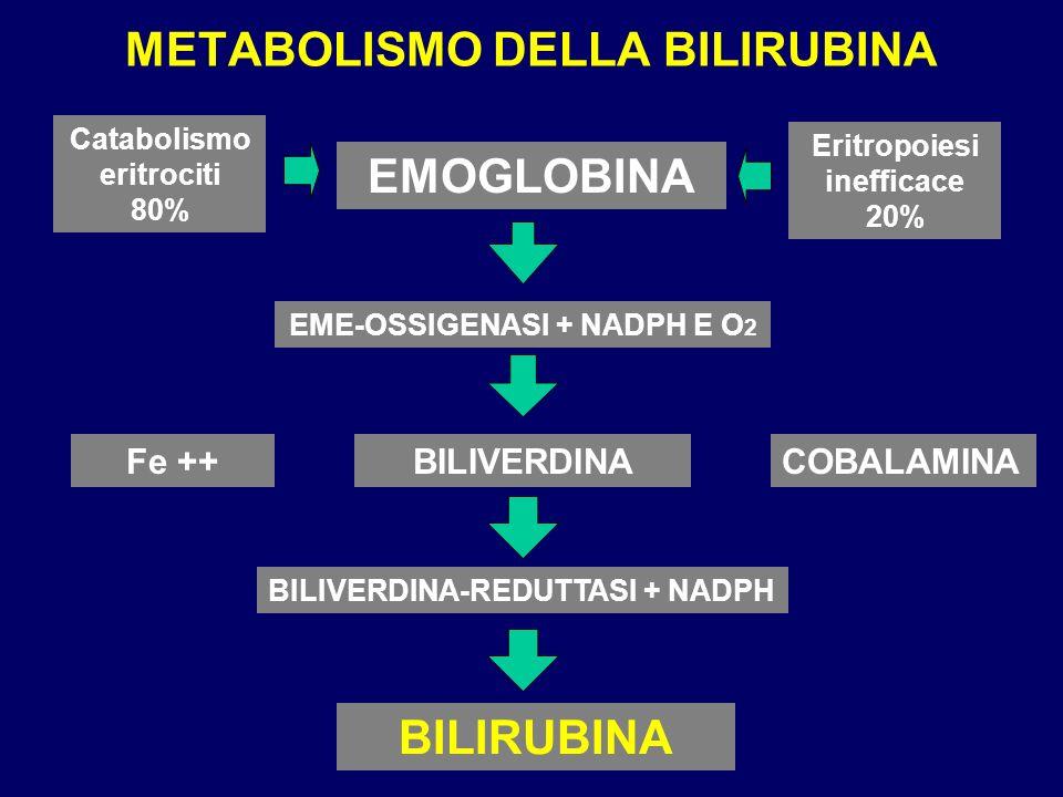 METABOLISMO DELLA BILIRUBINA EMOGLOBINA EME-OSSIGENASI + NADPH E O 2 Fe ++BILIVERDINA BILIRUBINA COBALAMINA BILIVERDINA-REDUTTASI + NADPH Catabolismo