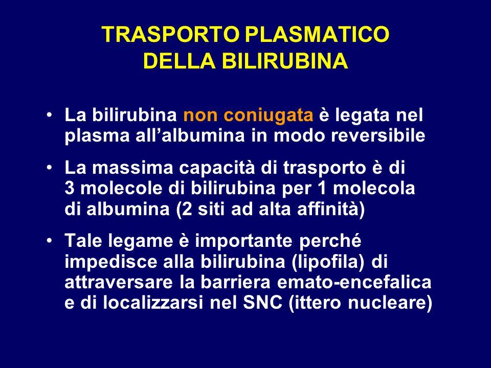 TRASPORTO PLASMATICO DELLA BILIRUBINA La bilirubina non coniugata è legata nel plasma allalbumina in modo reversibile La massima capacità di trasporto