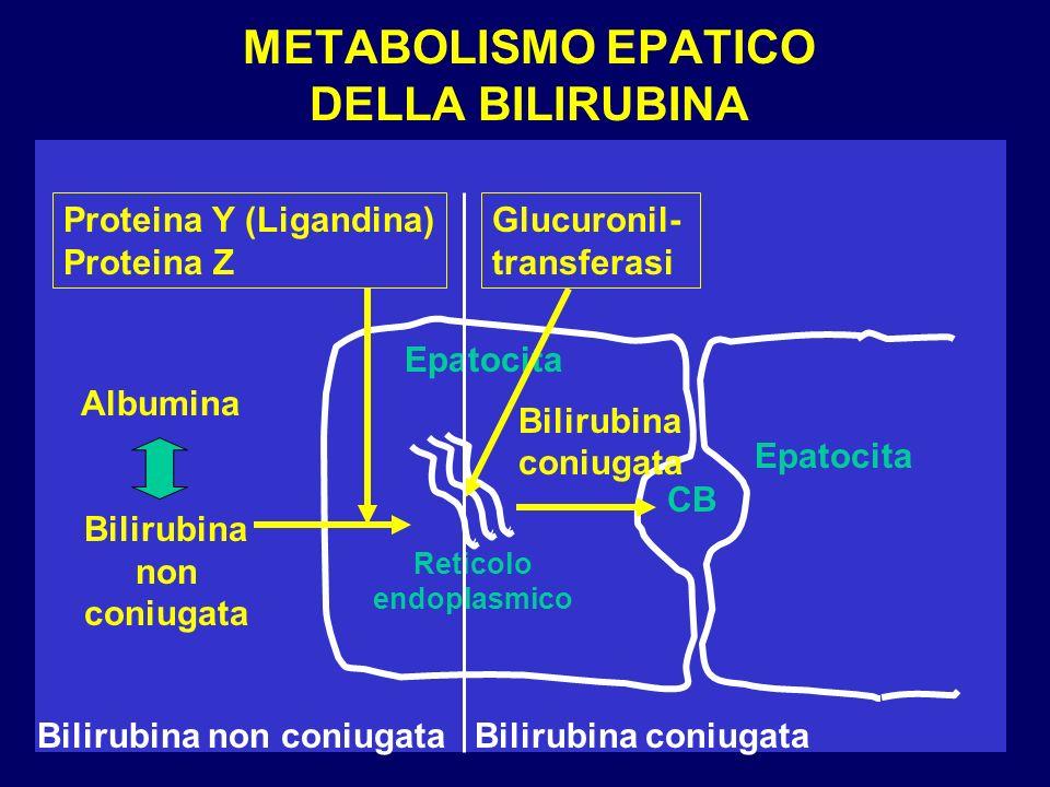 SINDROME DI GILBERT La bilirubinemia raddoppia dopo 48 ore di digiuno (test del digiuno positivo).