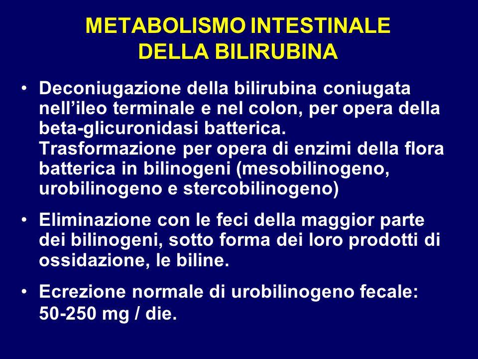 METABOLISMO INTESTINALE DELLA BILIRUBINA Deconiugazione della bilirubina coniugata nellileo terminale e nel colon, per opera della beta-glicuronidasi