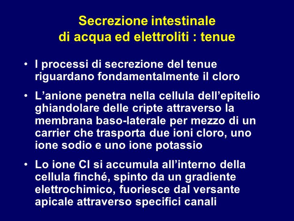Secrezione intestinale di acqua ed elettroliti : tenue I processi di secrezione del tenue riguardano fondamentalmente il cloro Lanione penetra nella c