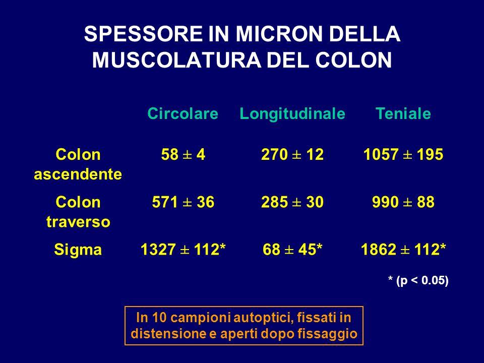 SPESSORE IN MICRON DELLA MUSCOLATURA DEL COLON 1862 ± 112*68 ± 45*1327 ± 112*Sigma 990 ± 88285 ± 30571 ± 36Colon traverso 1057 ± 195270 ± 1258 ± 4Colo