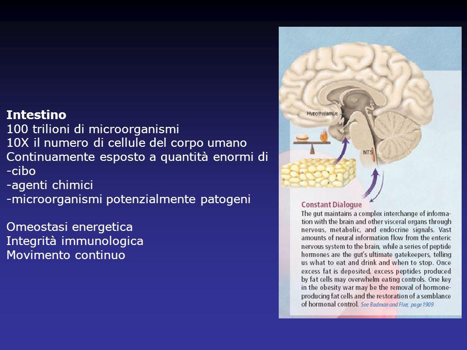 Esofago: struttura normale