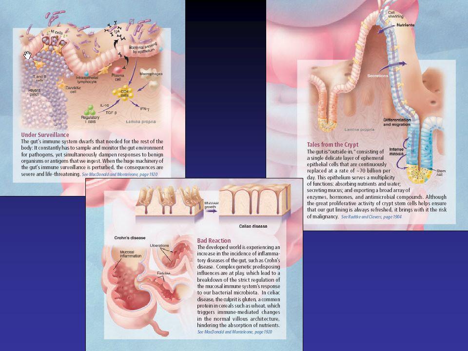 A denocarcinoma esofageo dati epidemiologici Incremento degli adenocarcinomi esofagei nei paesi occidentali: incidenza raddoppiata in 10 anni –5/100.000 –5/10 x nei maschi