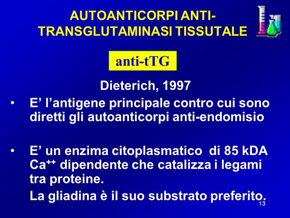 13 AUTOANTICORPI ANTI- TRANSGLUTAMINASI TISSUTALE Dieterich, 1997 E lantigene principale contro cui sono diretti gli autoanticorpi anti-endomisio E un enzima citoplasmatico di 85 kDA Ca ++ dipendente che catalizza i legami tra proteine.