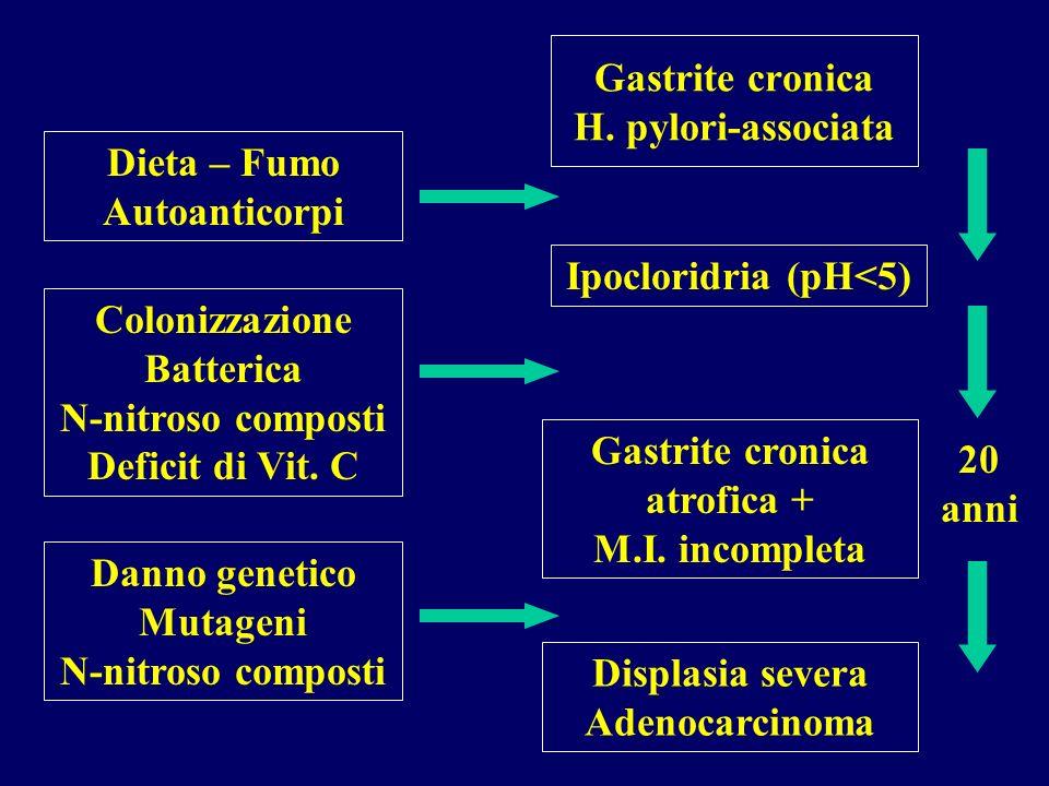 Gastrite cronica H. pylori-associata Dieta – Fumo Autoanticorpi Ipocloridria (pH<5) Colonizzazione Batterica N-nitroso composti Deficit di Vit. C Gast