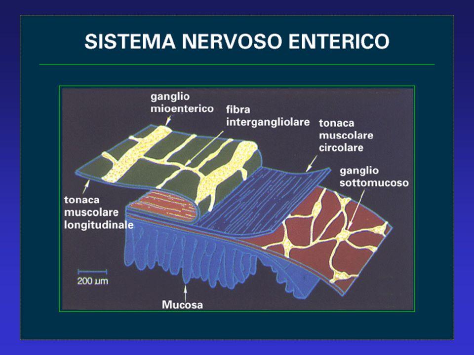 DISFAGIA ESOFAGEA Comparsa lenta (> 2 sec.