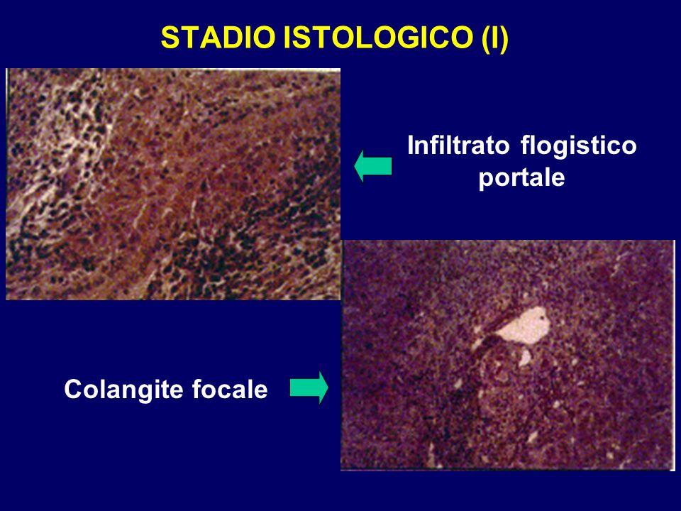 STADIO ISTOLOGICO (I) Infiltrato flogistico portale Colangite focale