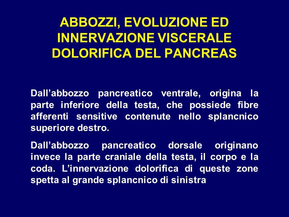 ABBOZZI, EVOLUZIONE ED INNERVAZIONE VISCERALE DOLORIFICA DEL PANCREAS Dallabbozzo pancreatico ventrale, origina la parte inferiore della testa, che po