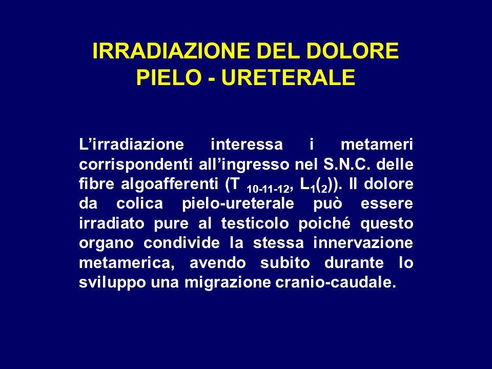 IRRADIAZIONE DEL DOLORE PIELO - URETERALE Lirradiazione interessa i metameri corrispondenti allingresso nel S.N.C. delle fibre algoafferenti (T 10-11-