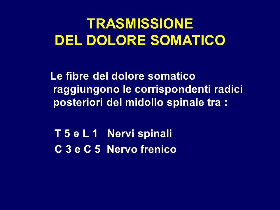 TRASMISSIONE DEL DOLORE SOMATICO Le fibre del dolore somatico raggiungono le corrispondenti radici posteriori del midollo spinale tra : T 5 e L 1 Nerv