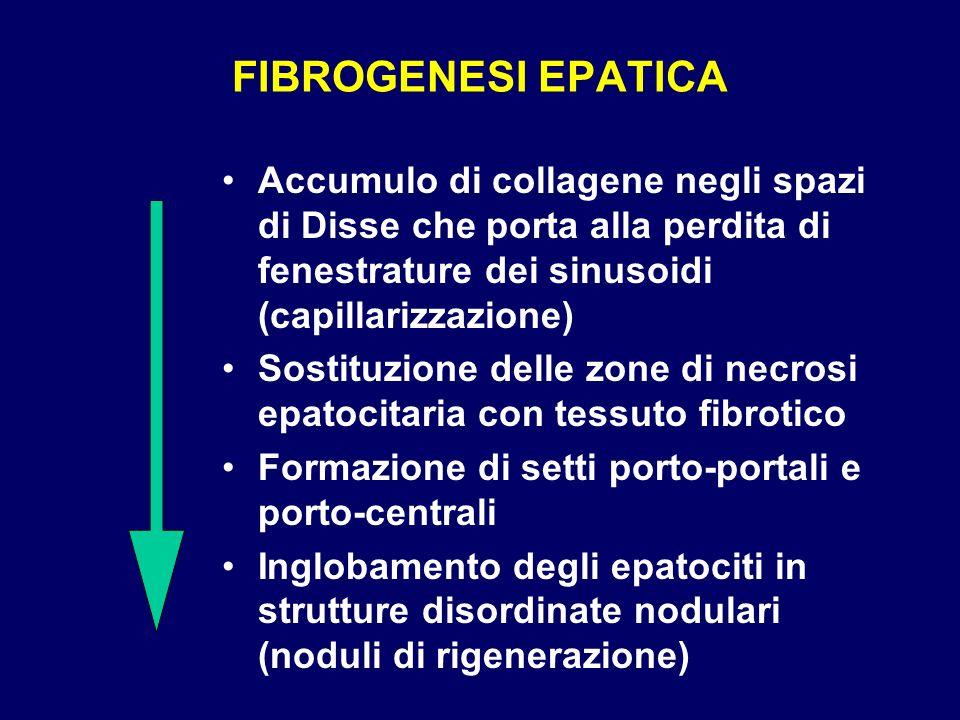 FIBROGENESI EPATICA Accumulo di collagene negli spazi di Disse che porta alla perdita di fenestrature dei sinusoidi (capillarizzazione) Sostituzione d