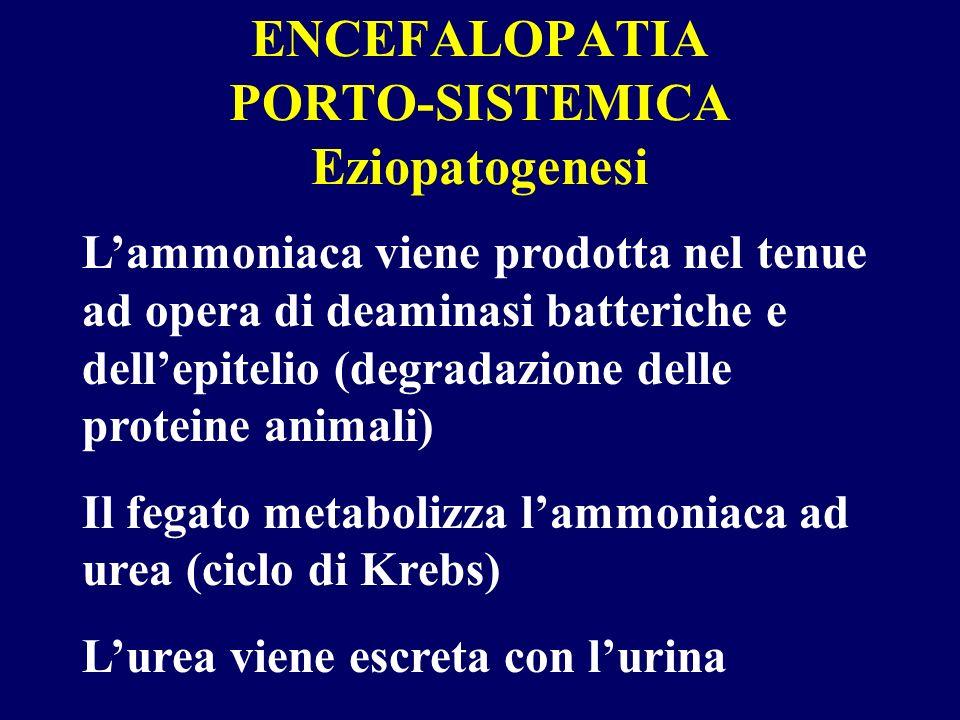 ENCEFALOPATIA PORTO-SISTEMICA Eziopatogenesi Lammoniaca viene prodotta nel tenue ad opera di deaminasi batteriche e dellepitelio (degradazione delle p