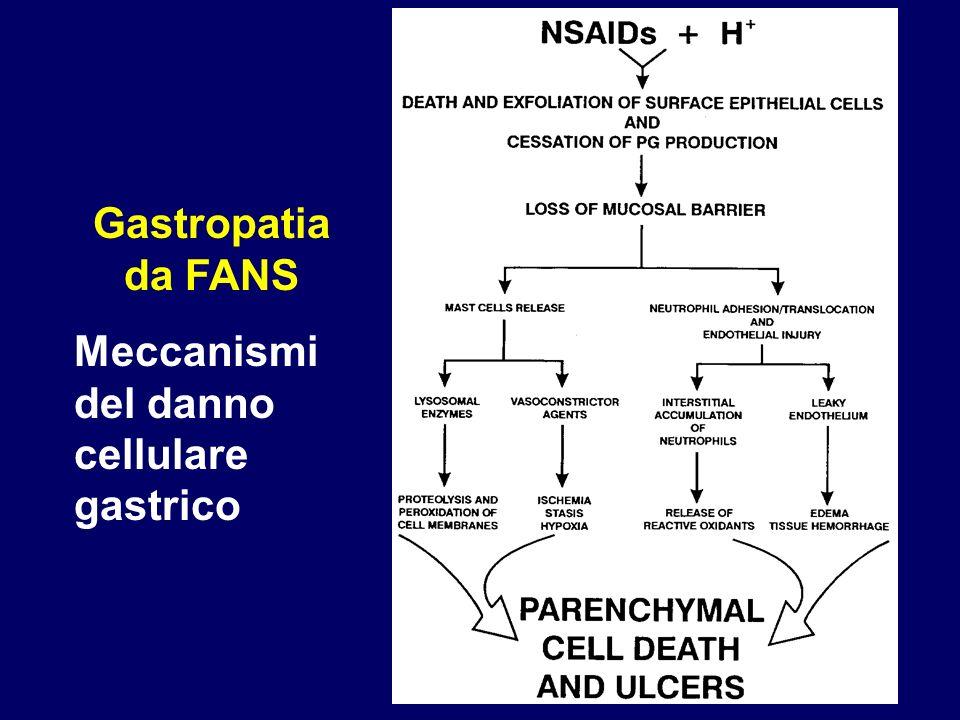 Gastropatia da FANS Meccanismi del danno cellulare gastrico