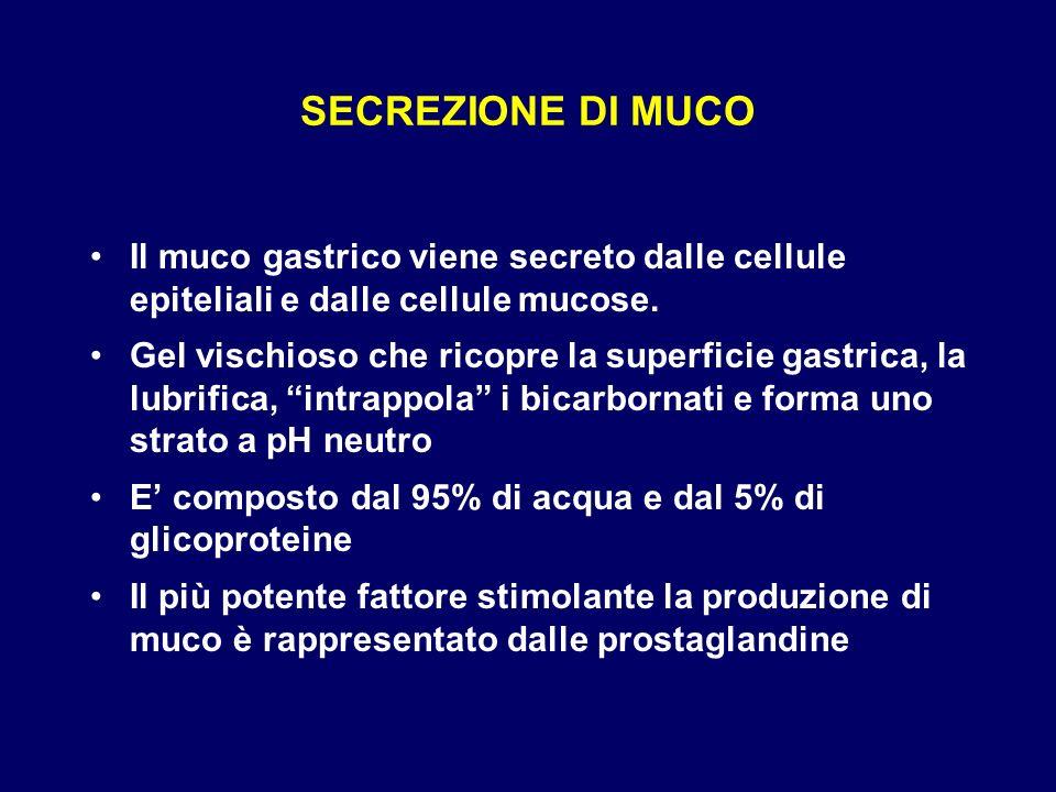 SECREZIONE DI MUCO Il muco gastrico viene secreto dalle cellule epiteliali e dalle cellule mucose. Gel vischioso che ricopre la superficie gastrica, l