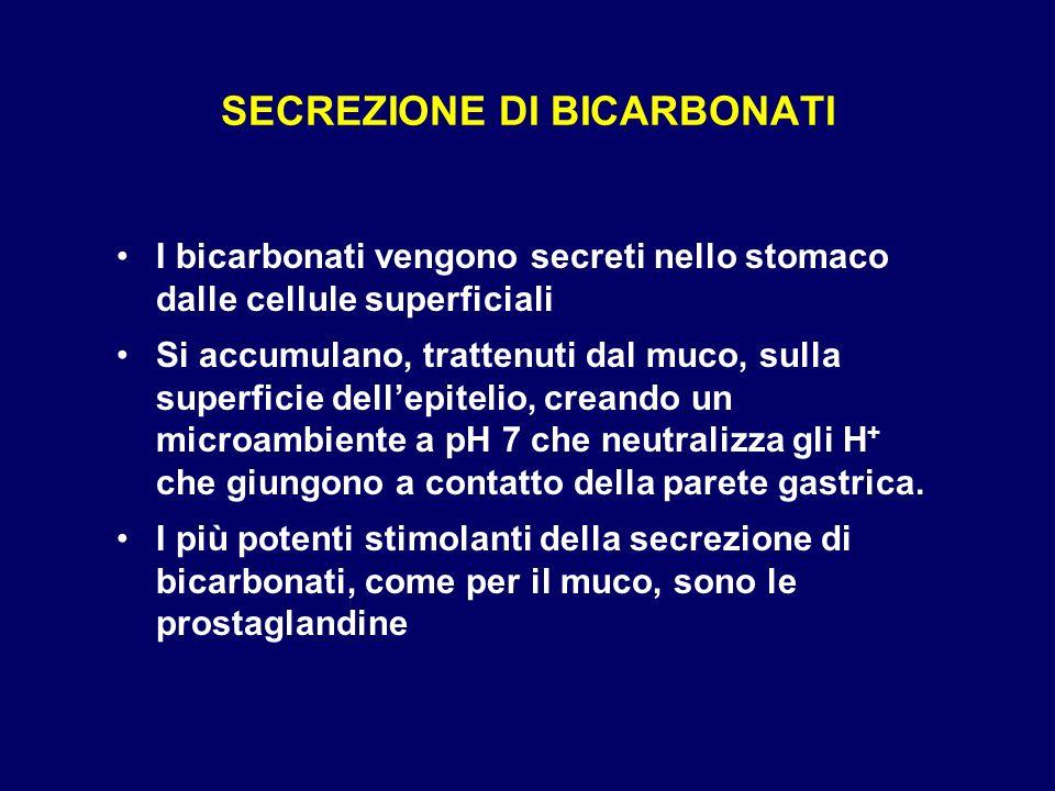 SECREZIONE DI BICARBONATI I bicarbonati vengono secreti nello stomaco dalle cellule superficiali Si accumulano, trattenuti dal muco, sulla superficie