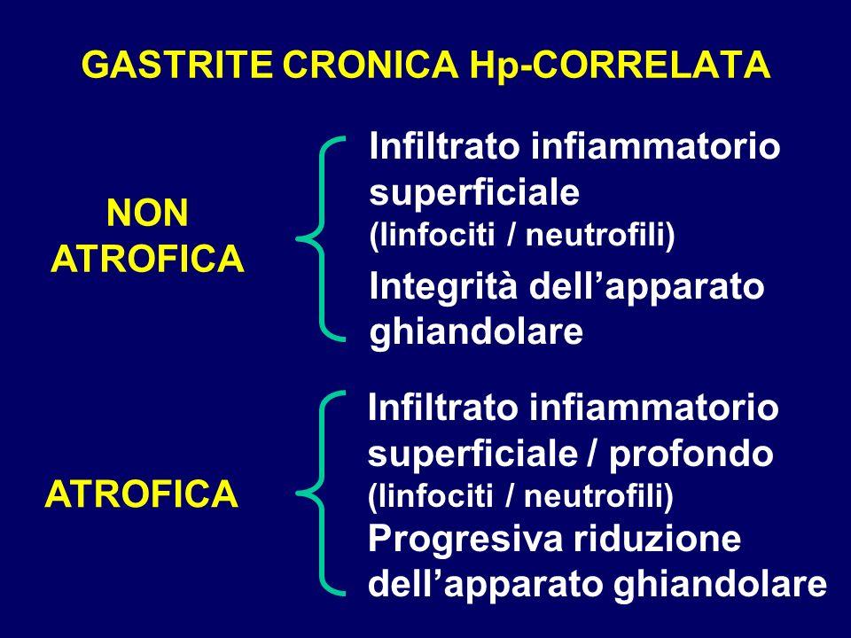 GASTRITE CRONICA Hp-CORRELATA Infiltrato infiammatorio superficiale (linfociti / neutrofili) Integrità dellapparato ghiandolare NON ATROFICA ATROFICA