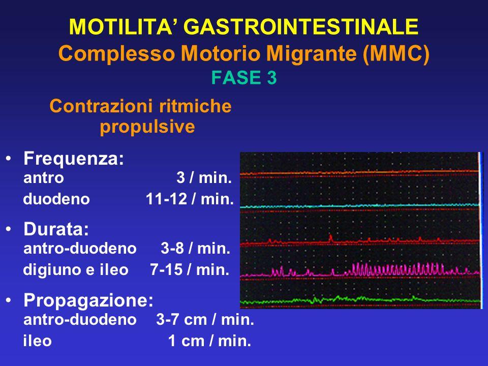 MOTILITA GASTROINTESTINALE Complesso Motorio Migrante (MMC) FASE 3 Contrazioni ritmiche propulsive Frequenza: antro 3 / min. duodeno 11-12 / min. Dura