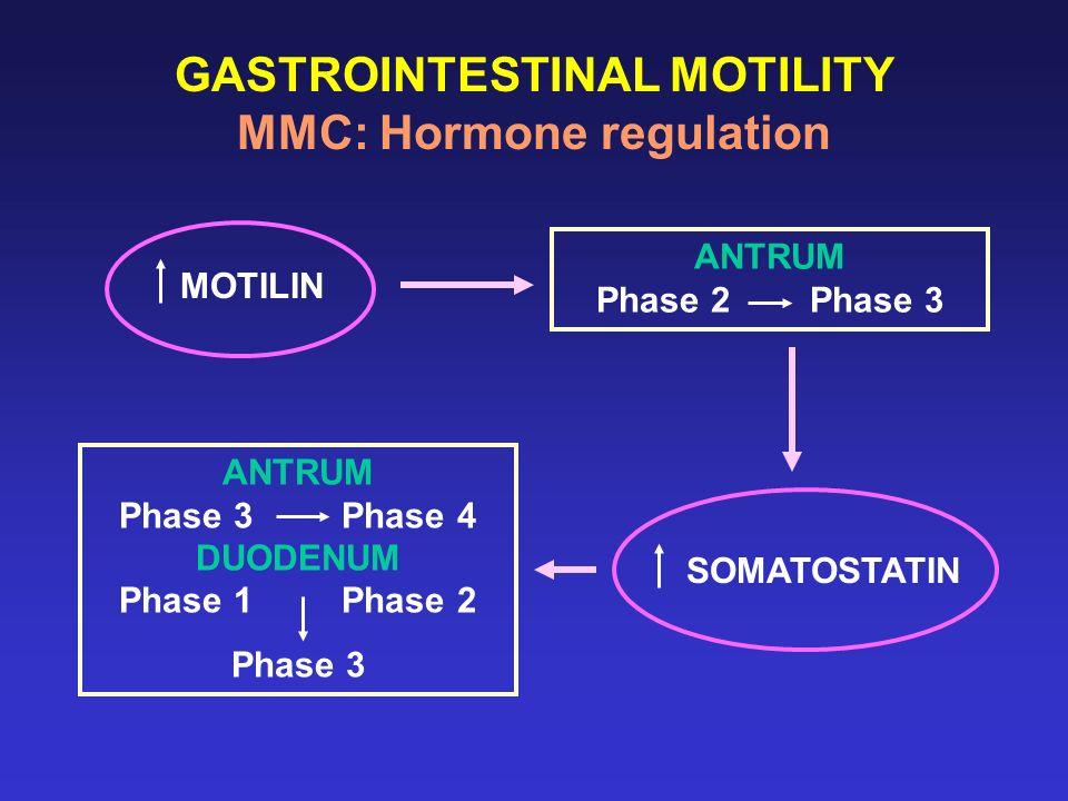 GASTROINTESTINAL MOTILITY MMC: Hormone regulation MOTILIN ANTRUM Phase 2 Phase 3 ANTRUM Phase 3 Phase 4 DUODENUM Phase 1 Phase 2 Phase 3 SOMATOSTATIN