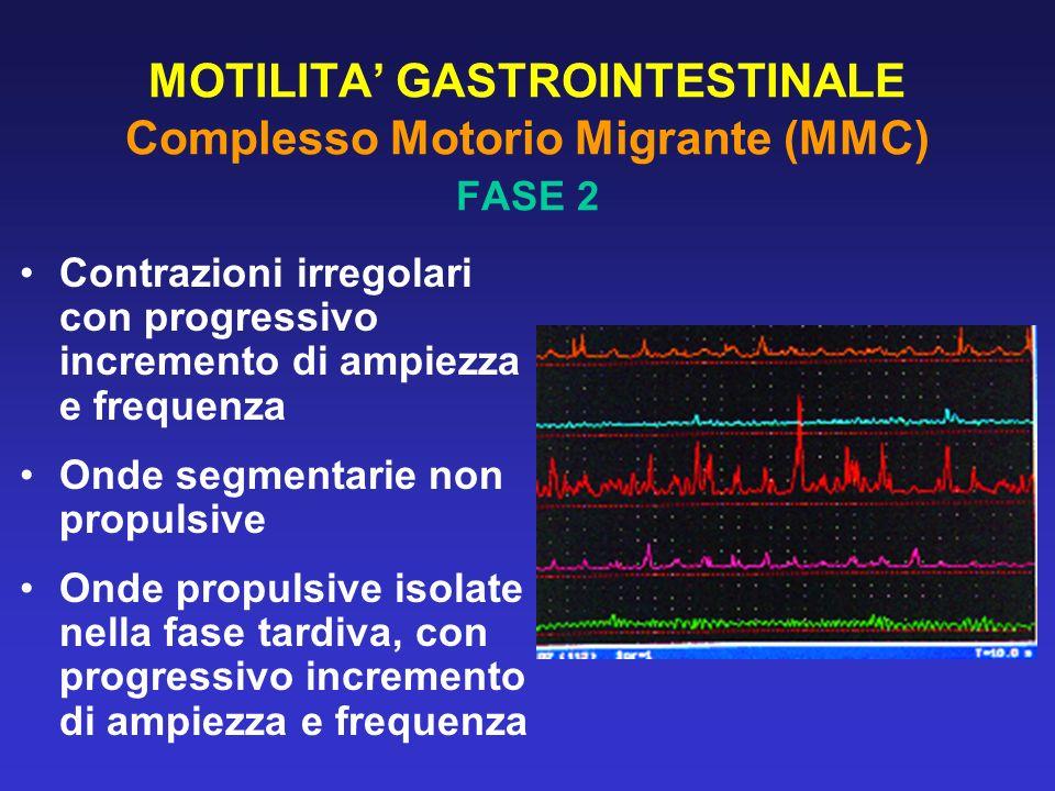 MOTILITA GASTROINTESTINALE Complesso Motorio Migrante (MMC) La terza fase gastrica coincide con la tarda seconda fase e con la terza fase duodenale Durante le contrazioni gastriche, le contrazioni duodenali sono inibite