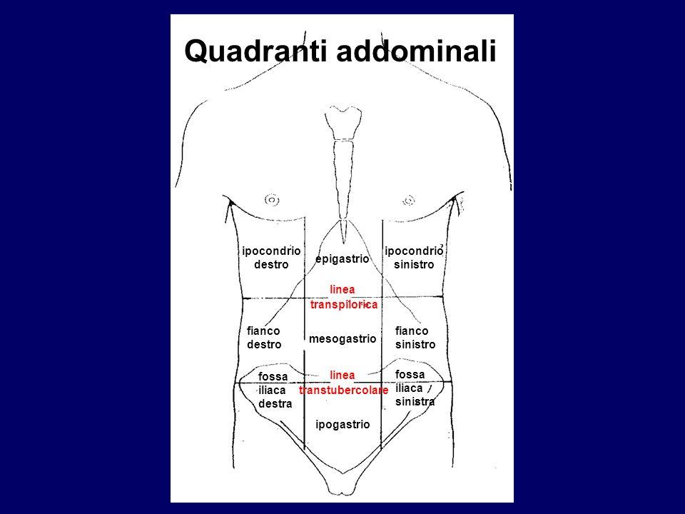 ipocondrio destro epigastrio ipocondrio sinistro linea transpilorica fianco destro fianco sinistro mesogastrio linea transtubercolare fossa iliaca des