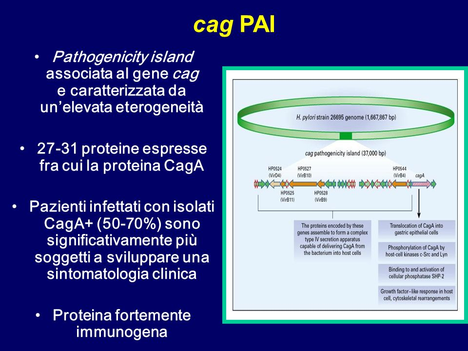 Pathogenicity island associata al gene cag e caratterizzata da unelevata eterogeneità 27-31 proteine espresse fra cui la proteina CagA Pazienti infettati con isolati CagA+ (50-70%) sono significativamente più soggetti a sviluppare una sintomatologia clinica Proteina fortemente immunogena cag PAI