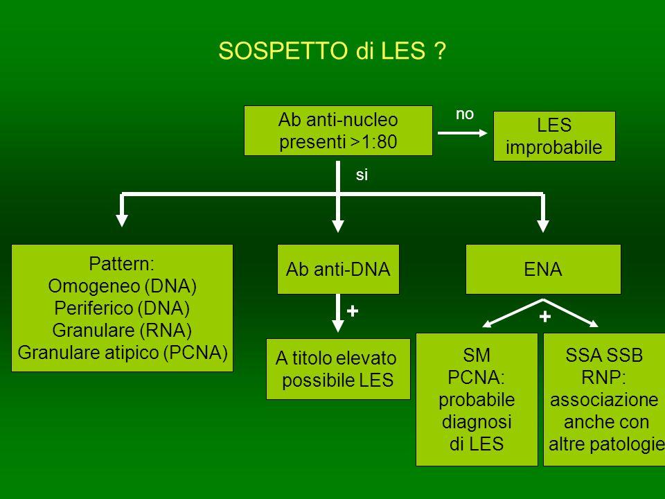 SOSPETTO di LES ? Ab anti-nucleo presenti >1:80 Pattern: Omogeneo (DNA) Periferico (DNA) Granulare (RNA) Granulare atipico (PCNA) Ab anti-DNAENA LES i
