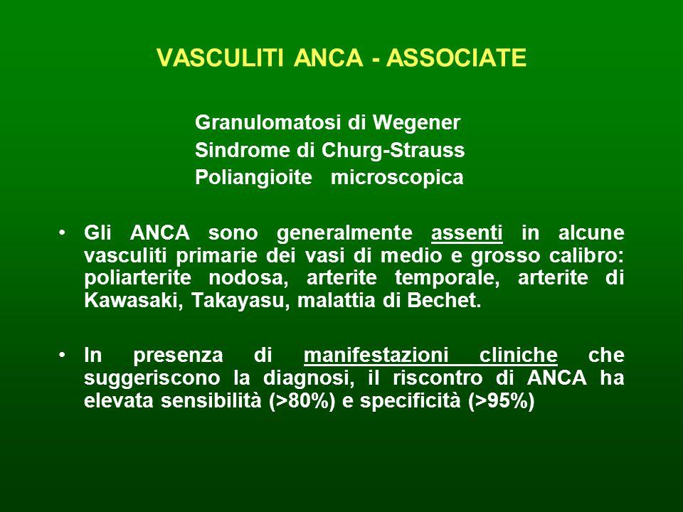 VASCULITI ANCA - ASSOCIATE Granulomatosi di Wegener Sindrome di Churg-Strauss Poliangioite microscopica Gli ANCA sono generalmente assenti in alcune v