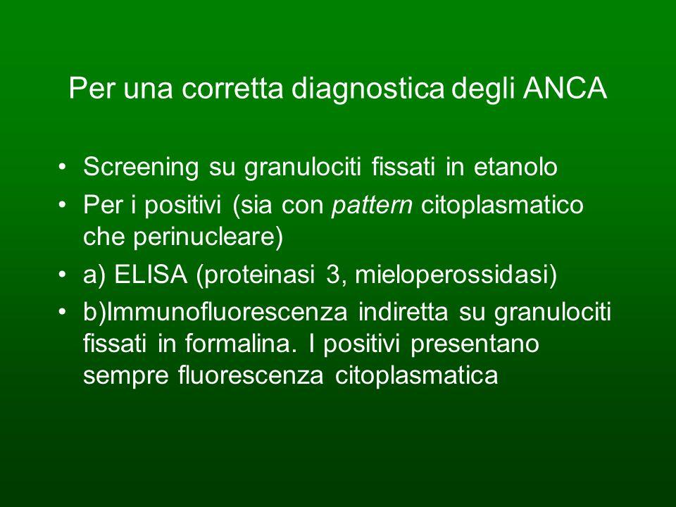 Per una corretta diagnostica degli ANCA Screening su granulociti fissati in etanolo Per i positivi (sia con pattern citoplasmatico che perinucleare) a