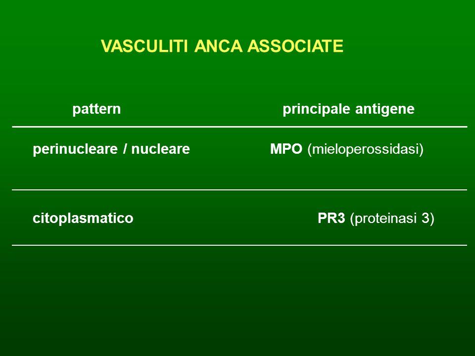 VASCULITI ANCA ASSOCIATE pattern principale antigene perinucleare / nucleareMPO (mieloperossidasi) citoplasmaticoPR3 (proteinasi 3)