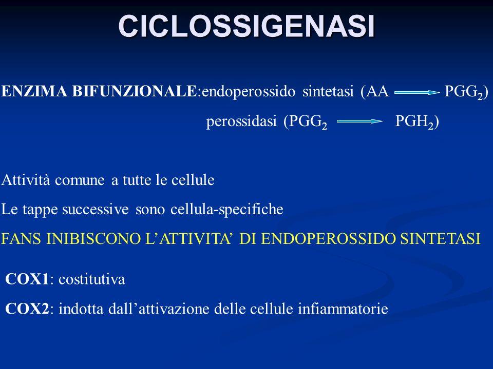 CICLOSSIGENASI ENZIMA BIFUNZIONALE:endoperossido sintetasi (AA PGG 2 ) perossidasi (PGG 2 PGH 2 ) Attività comune a tutte le cellule Le tappe successi